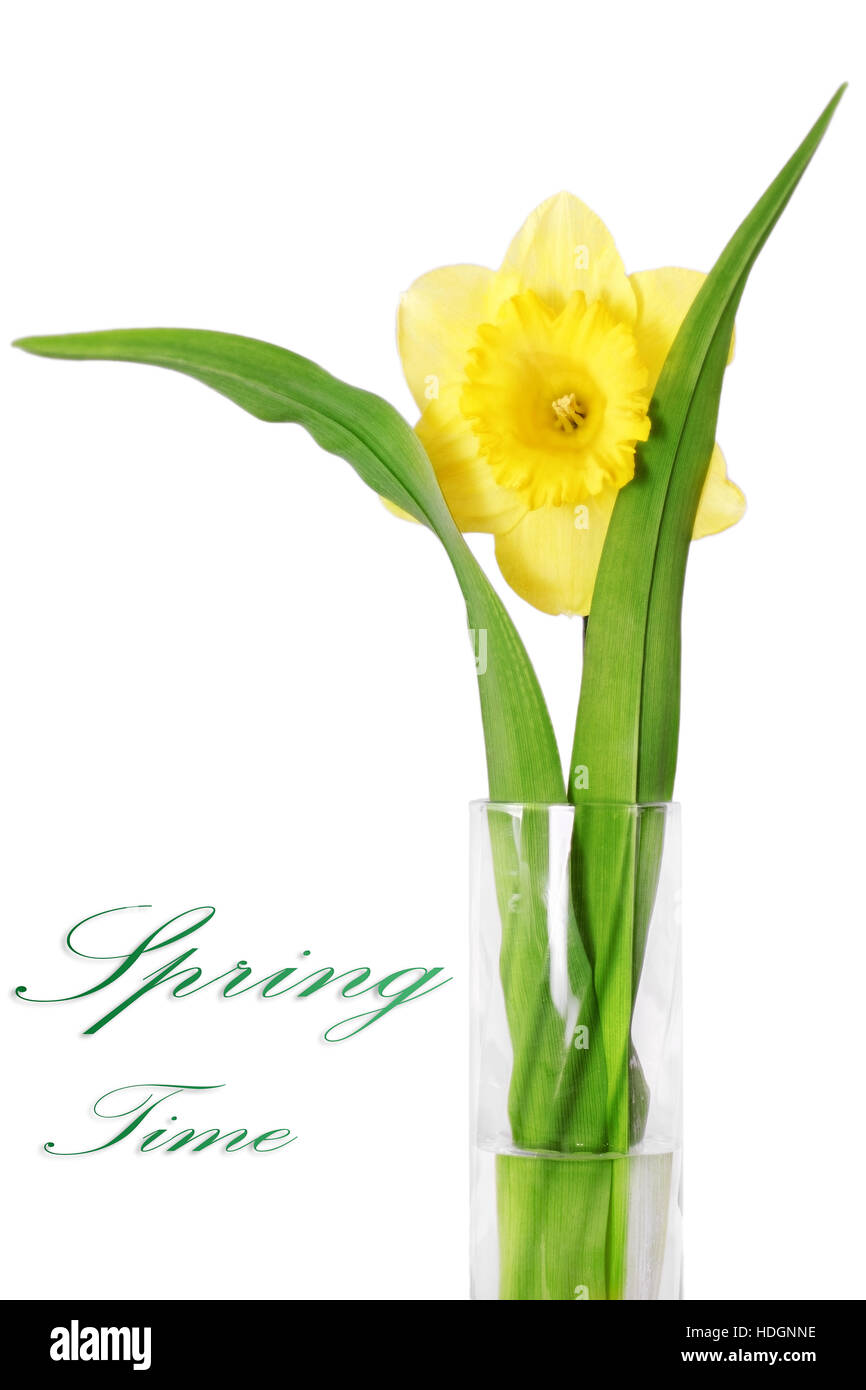 Beautiful spring single flower in vase stock photos beautiful beautiful spring single flower in vase yellow narcissus daffodil isolated over white izmirmasajfo