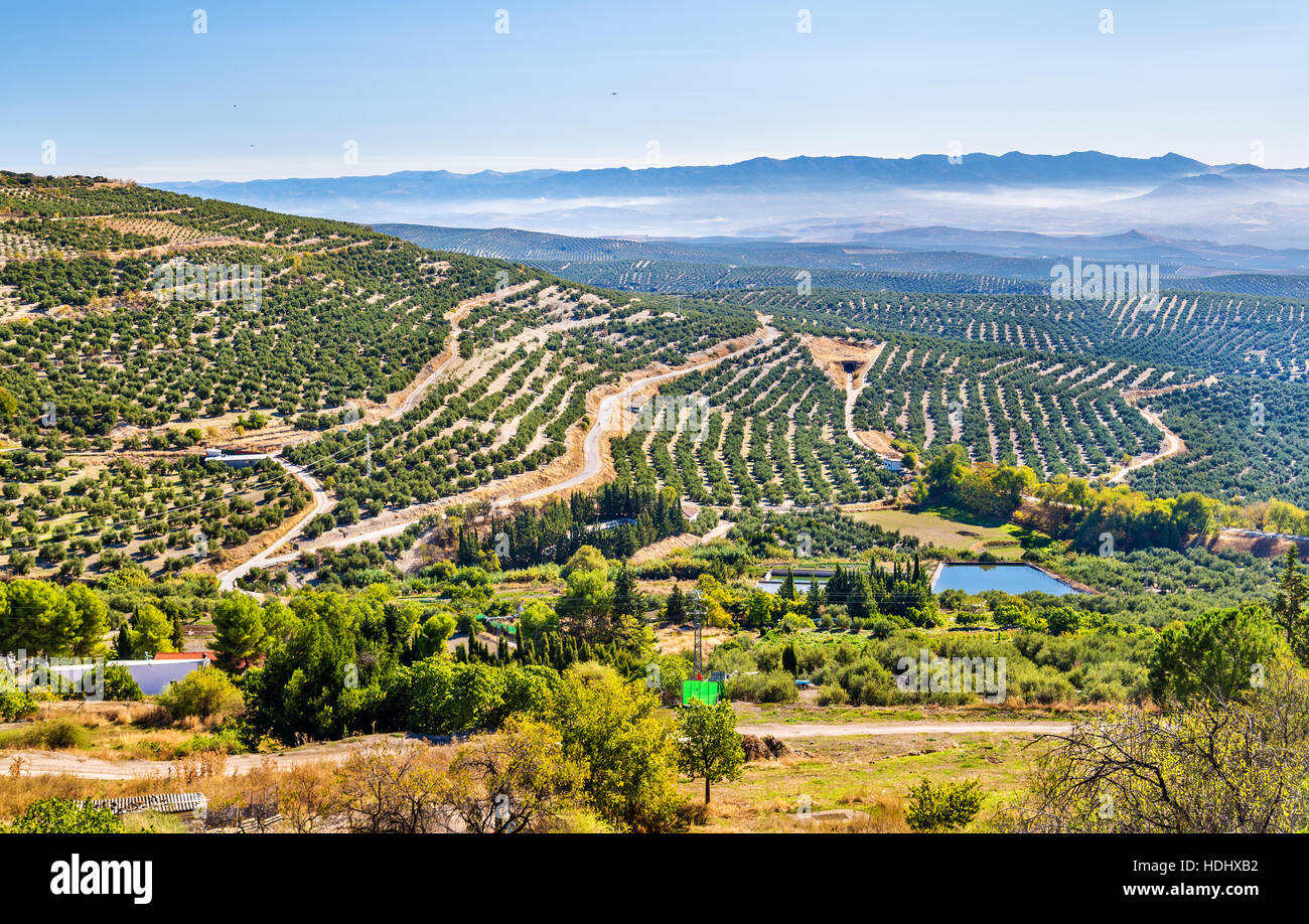 Landscape with olive fields near Ubeda - Spain Stock Photo