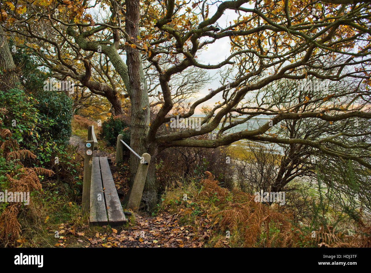 Footpath, wooden bridge and stunted oaks trees in autumn on a footpath from Itchenor along the Chichester Channel - Stock Image