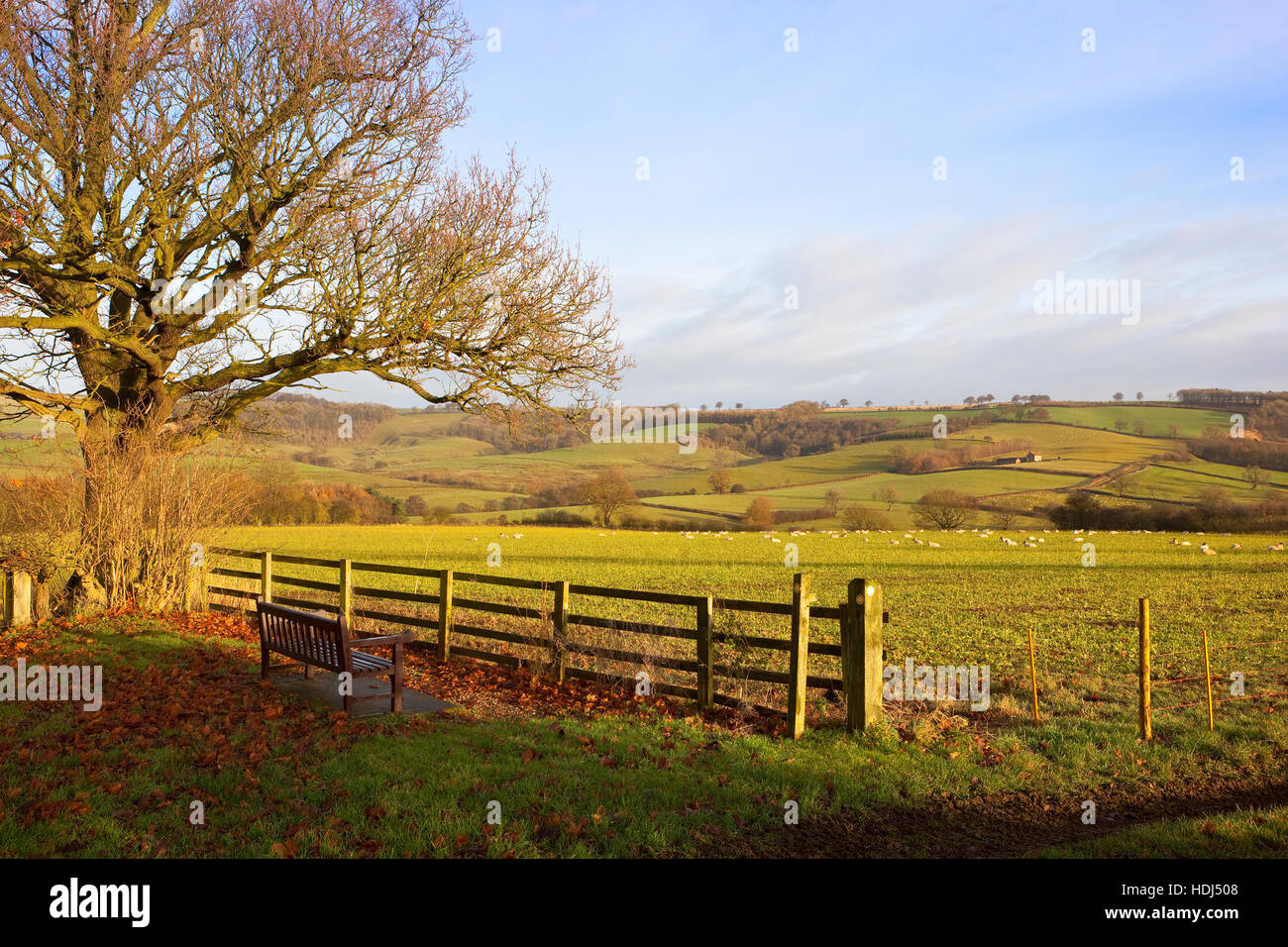 A wooden bench seat and fence by an Oak tree in the scenic  Yorkshire wolds landscape under a blue cloudy sky in - Stock Image