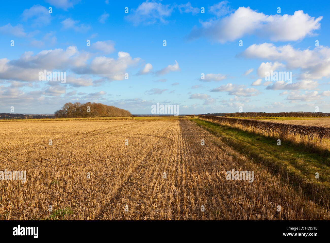 Patterns and textures of an autumn landscape with hawthorn hedgerows and stubble on the Yorkshire wolds. - Stock Image