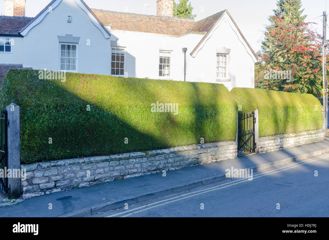 Well maintained yew hedge around a house in Much Wenlock, Shropshire - Stock Image