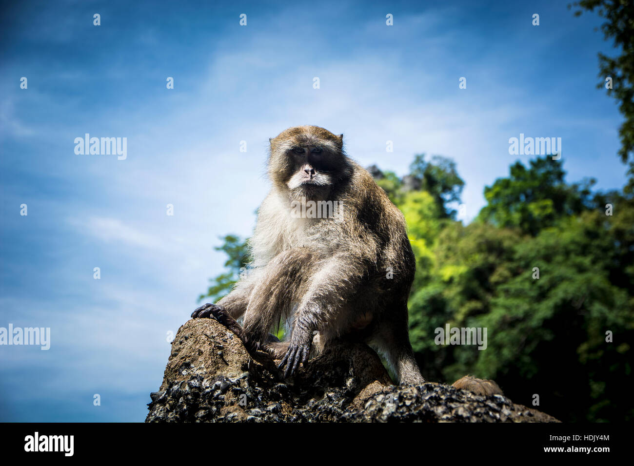 Monkey sitting on rock on background of jungles and sky. - Stock Image