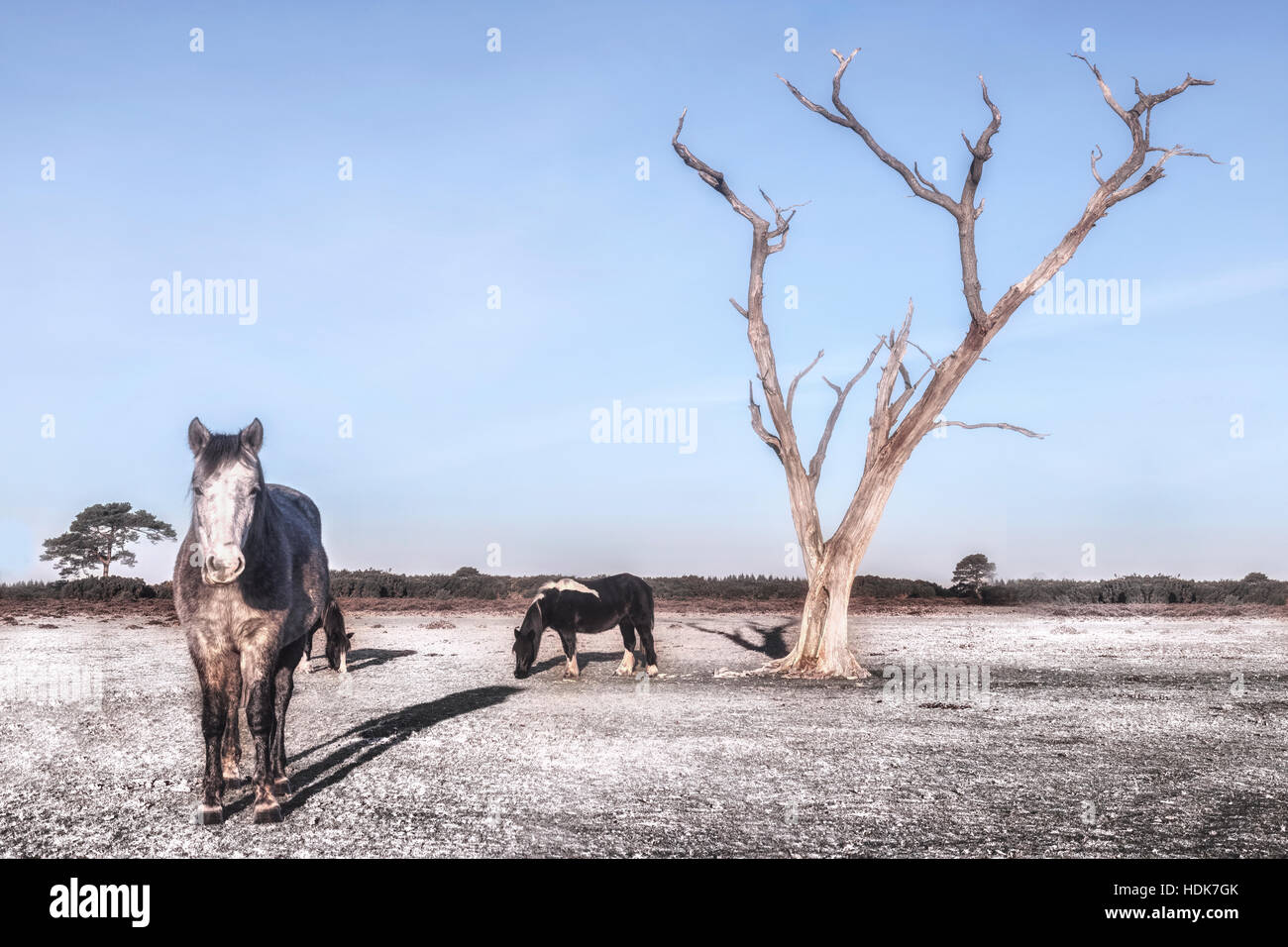 New Forest ponies under a tree in Hampshire, England, UK - Stock Image