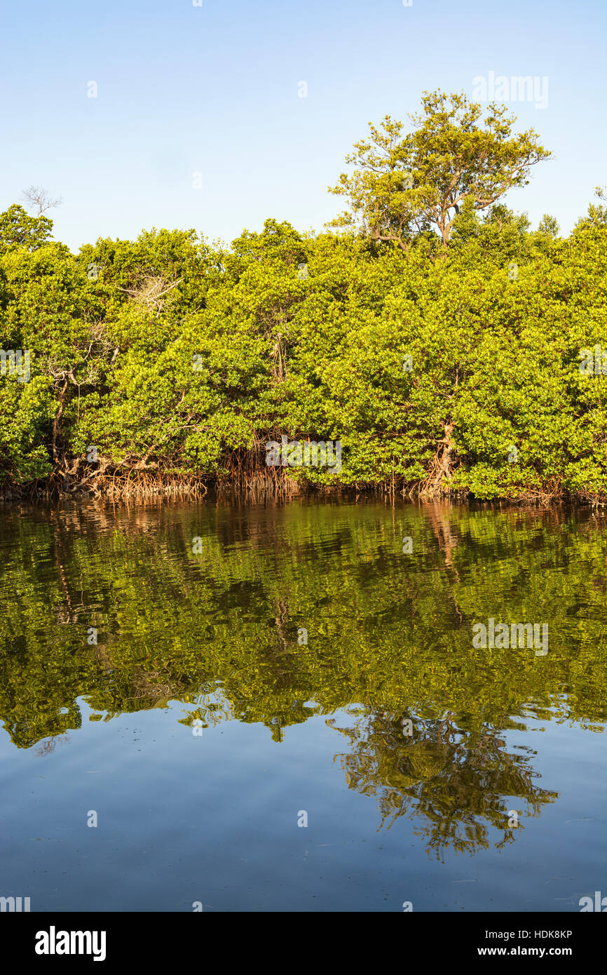 Florida, Sanibel Island, J.N. 'Ding' Darling National Wildlife Refuge, Wildlife Drive, view from Wulfert - Stock Image