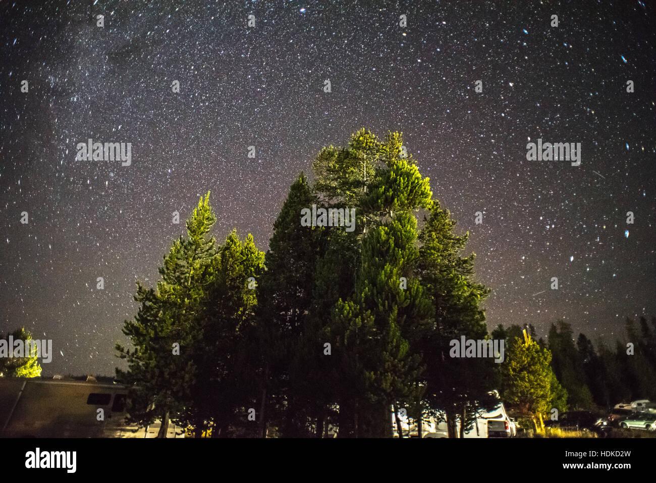 stars, tree, night sky, sky, starry sky, camping, roadtrip. yellowstone, yellow stone national park, winter - Stock Image