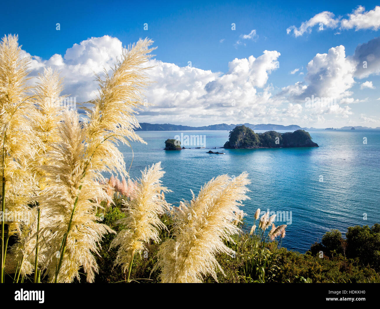 The Coromandel coast of North Island New Zealand near Hahei and Cathedral Cove - Stock Image