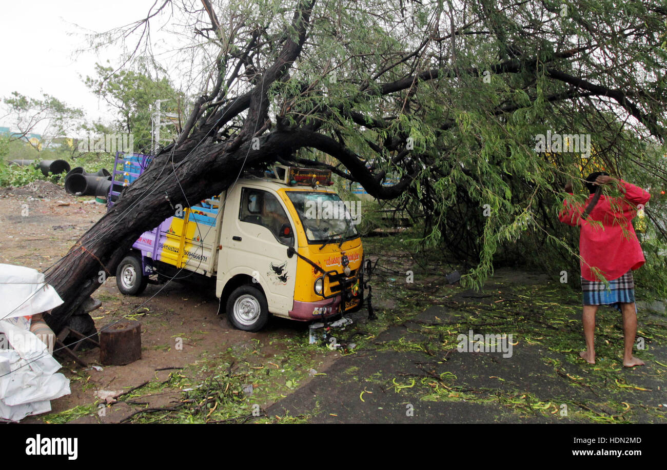 (161213) -- CHENNAI, INDIA, Dec. 13, 2016 (Xinhua) -- A vehicle is hit by a tree blew down by strong wind when Cyclone - Stock Image