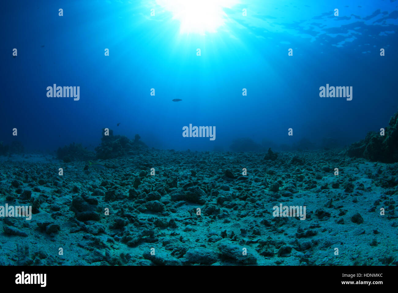 Damaged Coral Reef Stock Photos & Damaged Coral Reef Stock ...