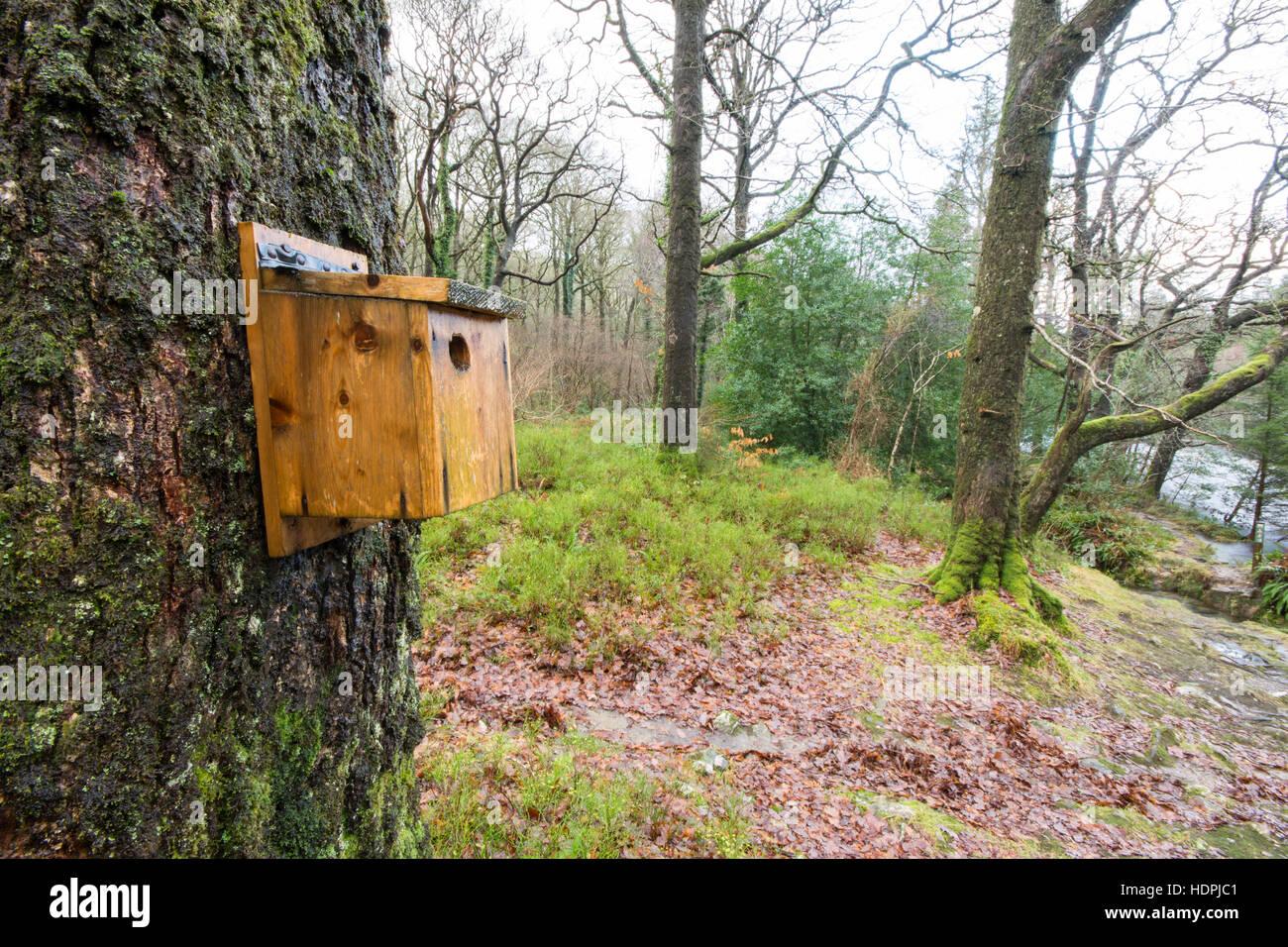 Bird nesting box on a tree in damp woodland - Stock Image