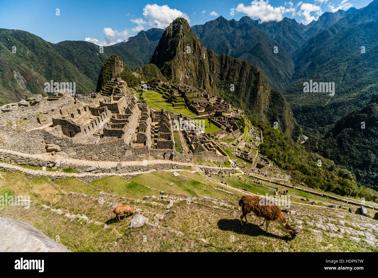 View of the Lost Incan City of Machu Picchu near Cusco, Peru. Machu Picchu is a Peruvian Historical Sanctuary. Llama - Stock Image