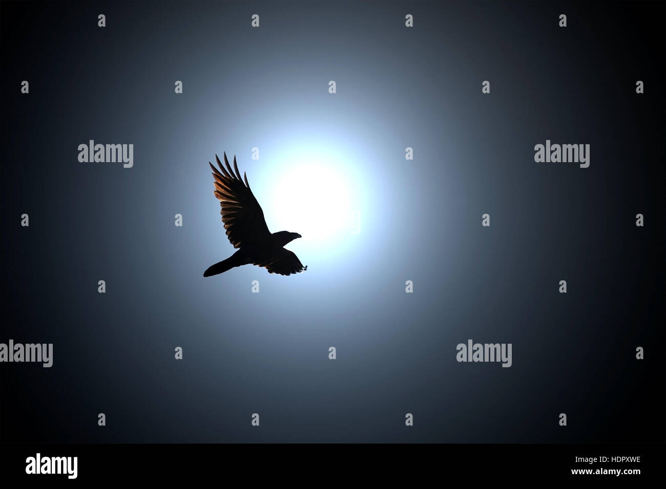 Mysterious Black Raven flies against Full Moon at Night. - Stock Image