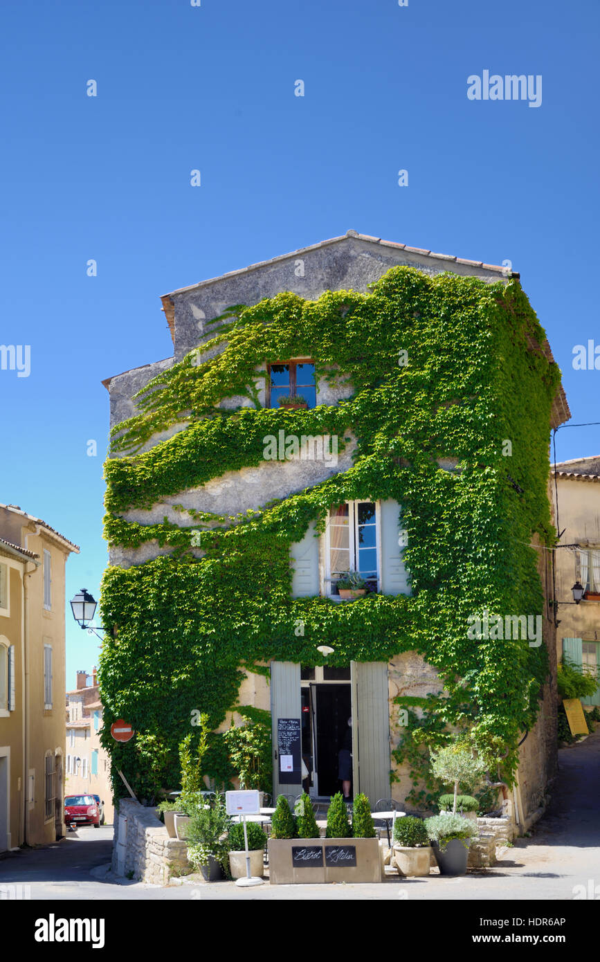 Pavement Café and Terrace in Creeper-Covered Village House Saignon Luberon Provence France - Stock Image