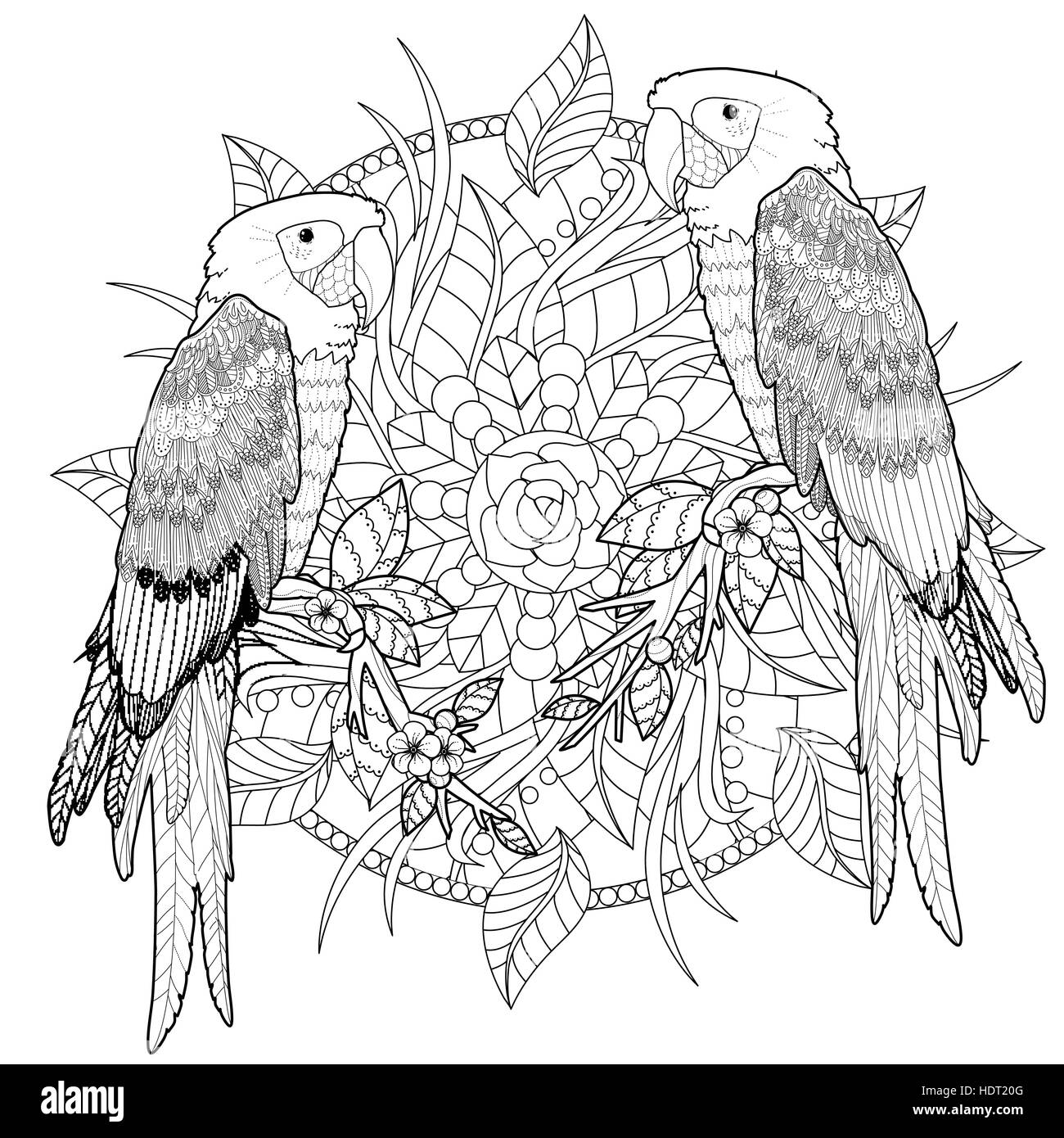 Lovely Parrot Coloring Page In Exquisite Style Stock Vector Art