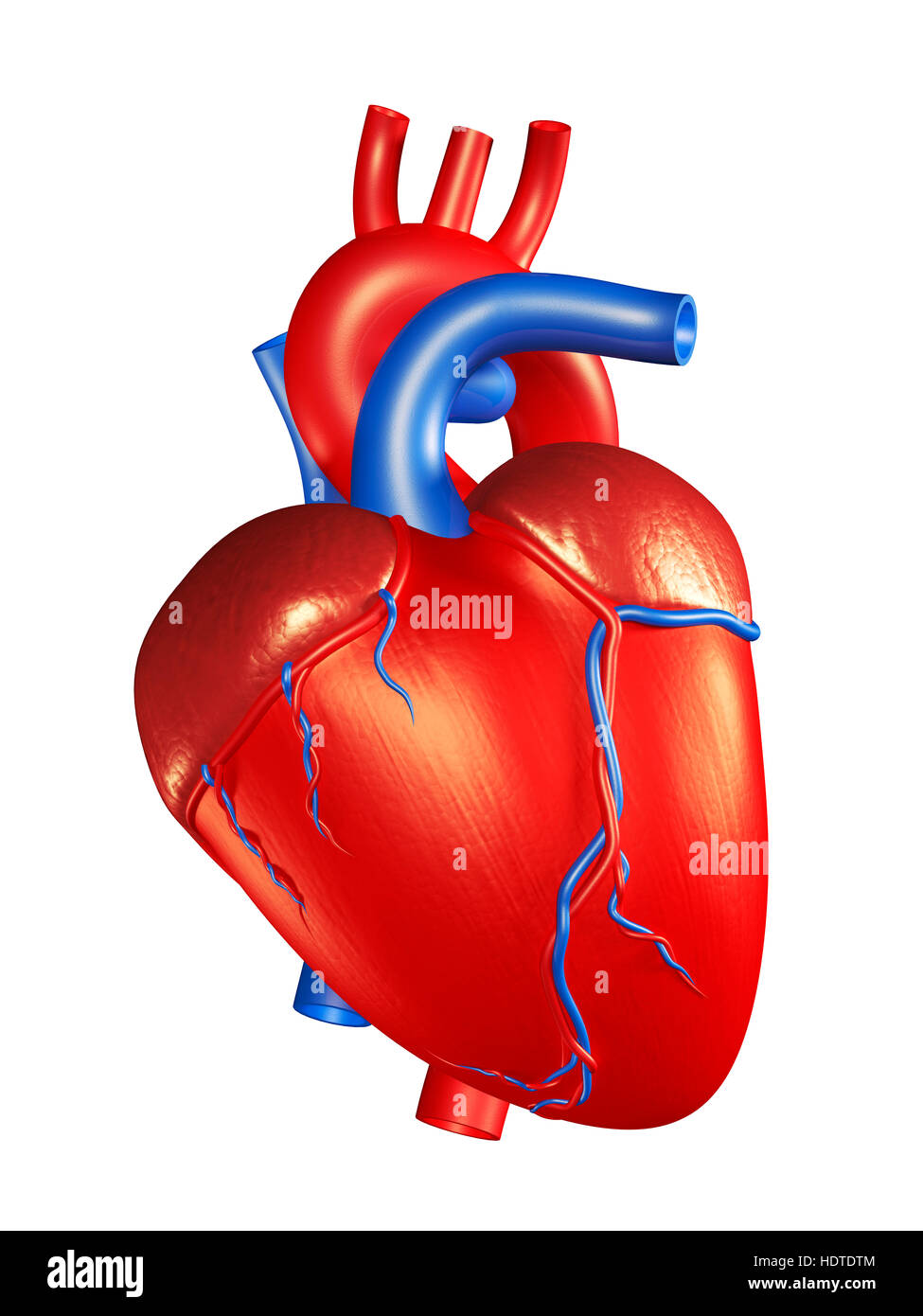 Human heart, 3D illustration - Stock Image