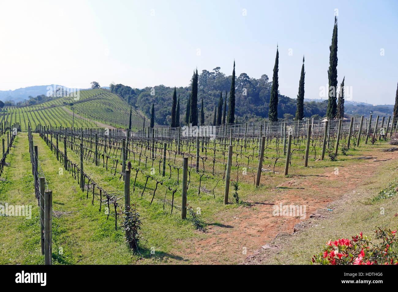 The landscapes of the vineyards in one of the most producing regions of wines and sparkling of Brazil - Stock Image