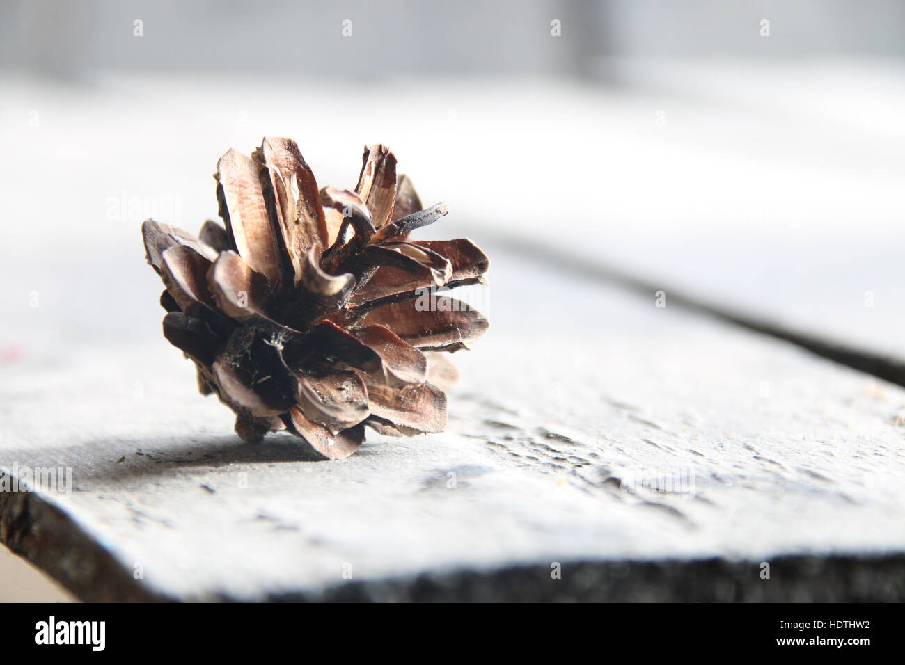 Rustic Winter Or Autumn Wallpaper Pine Cone On Gray Background Space For Text