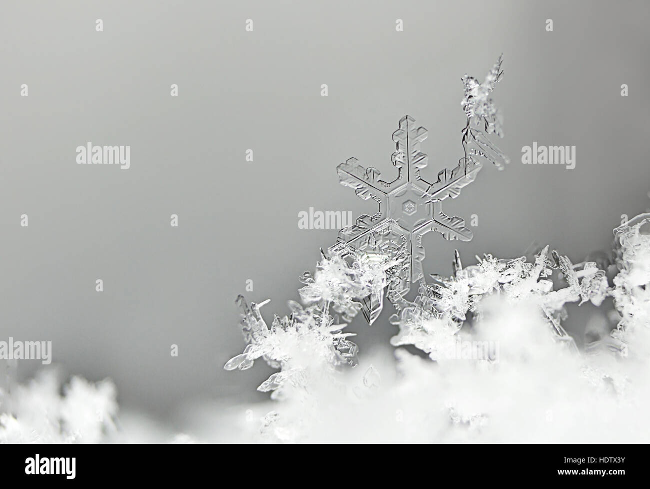 A small, small, transparent snowflake with a single scar on a small bird - Stock Image