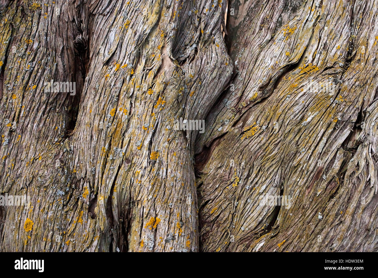 textured tactile tree bark - Stock Image