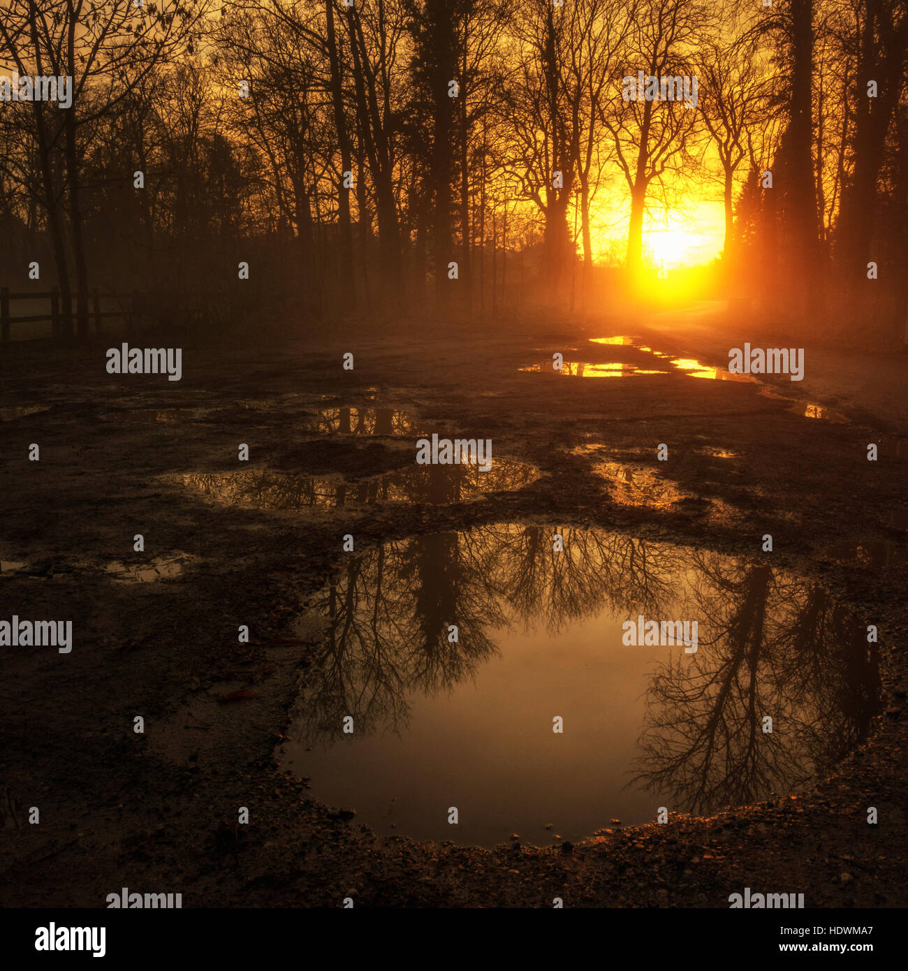Misty glowing dawn sun on a country path with puddles reflecting orange glowing light and trees, Ilkley, Yorkshire, - Stock Image