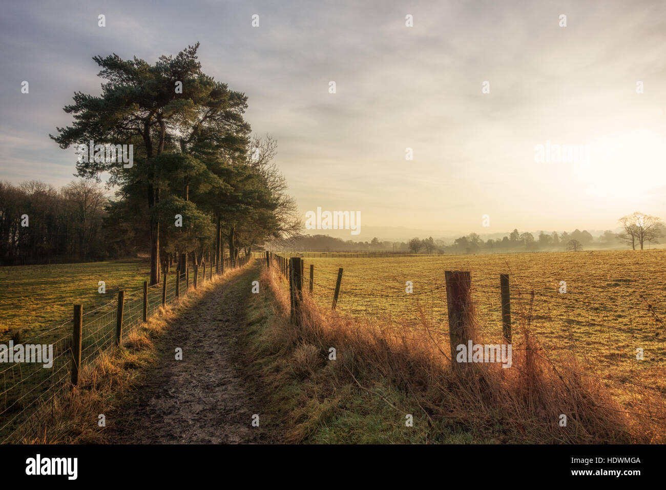 UK COUNTRYSIDE: Early morning light on a country path lined with Scots pine trees, Ilkley, West Yorkshire, England, - Stock Image