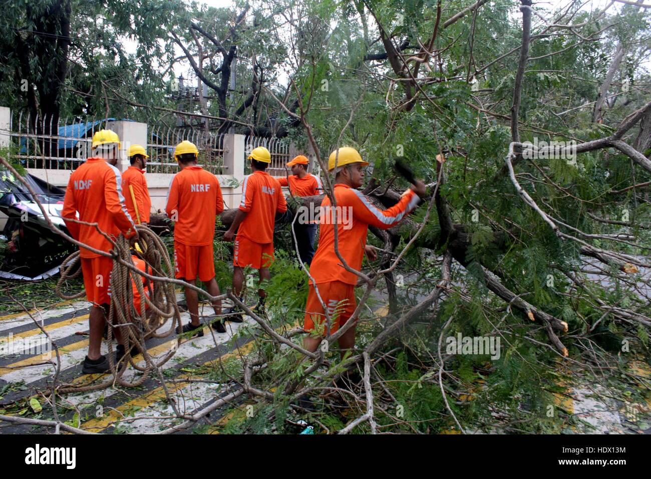 Members of the Disaster Response Force (NDRF) removing trees that came in the path of Cyclone Vardah, lie uprooted - Stock Image