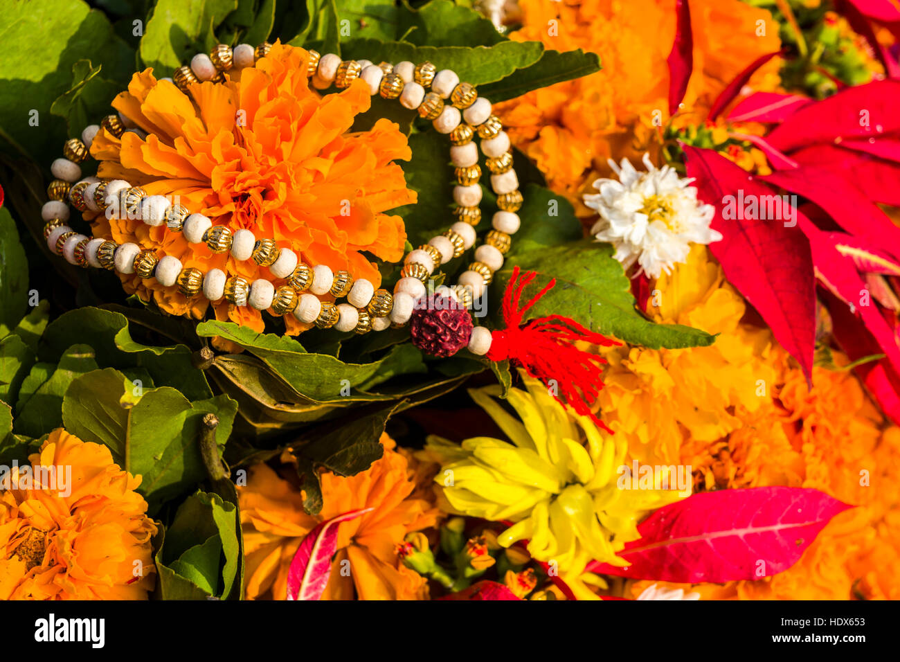 Colorful flowers for religious use are sold at Pashupatinath Temple - Stock Image