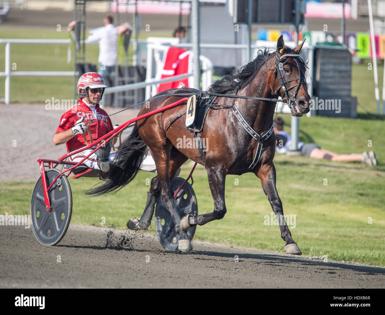 Horse Power Horses Trotter Trotting Racing Sulky Stock Photos