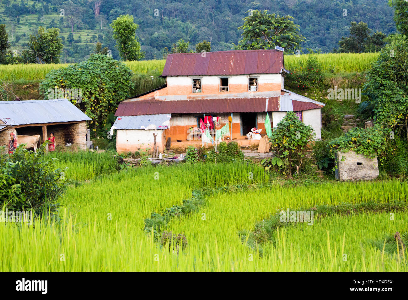 Local house in the hills near Pokhara, Nepal - Stock Image