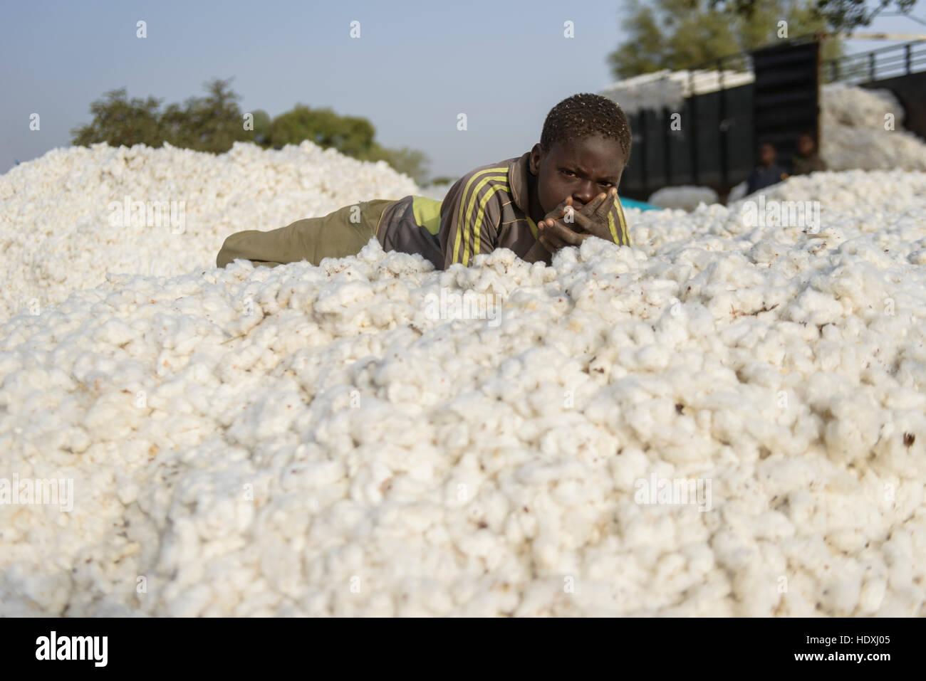 cotton recollection, Burkina Faso - Stock Image