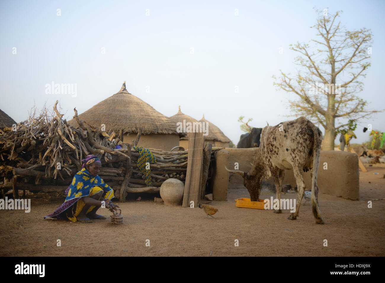 Rural life in a Fulani village of the Sahel in northeastern Burkina Faso - Stock Image