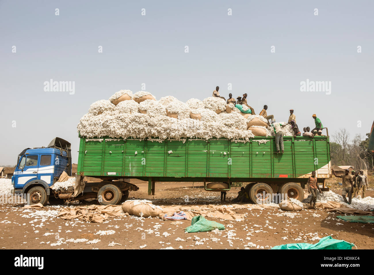 Work in the cotton fields of Cote D'Ivoire, (Ivory Coast) - Stock Image
