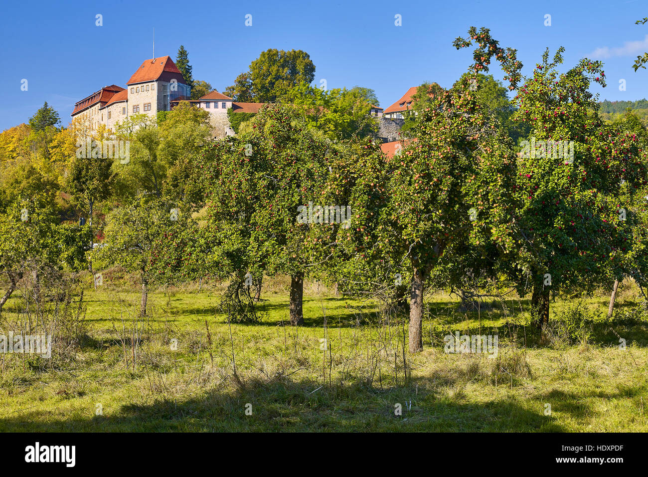 Creuzburg castle with fruit trees in Creuzburg, Thuringia, Germany - Stock Image