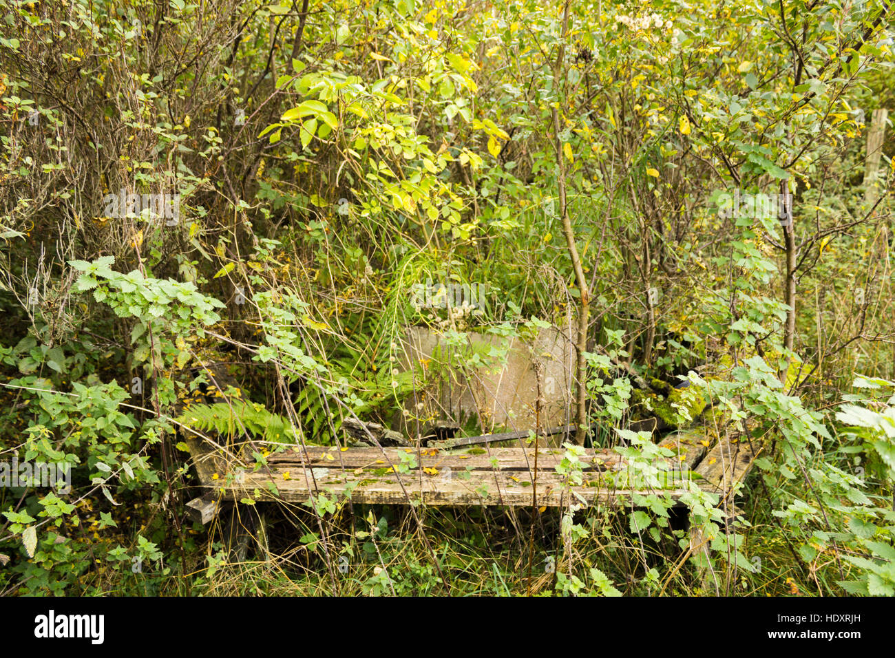 A hidden, abandoned and overgrown campfire place - Stock Image