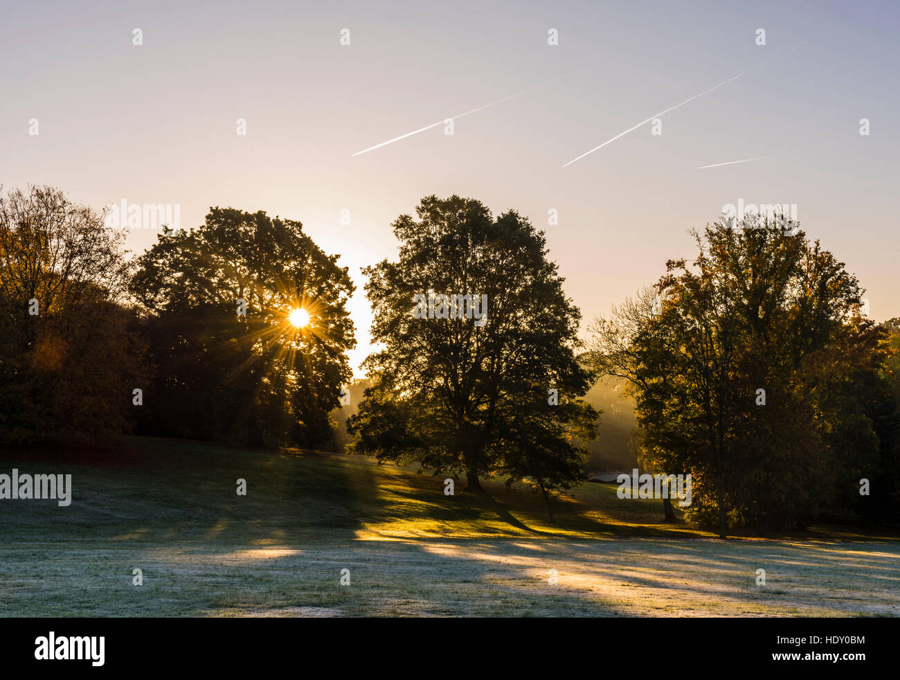 Early morning sunrise captured through trees on Hampstead Heath, London, UK - Stock Image