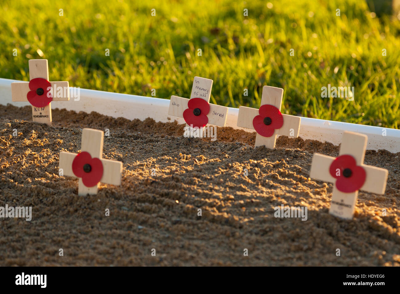 Remembrance day poppys, Ashford, Kent, UK - Stock Image