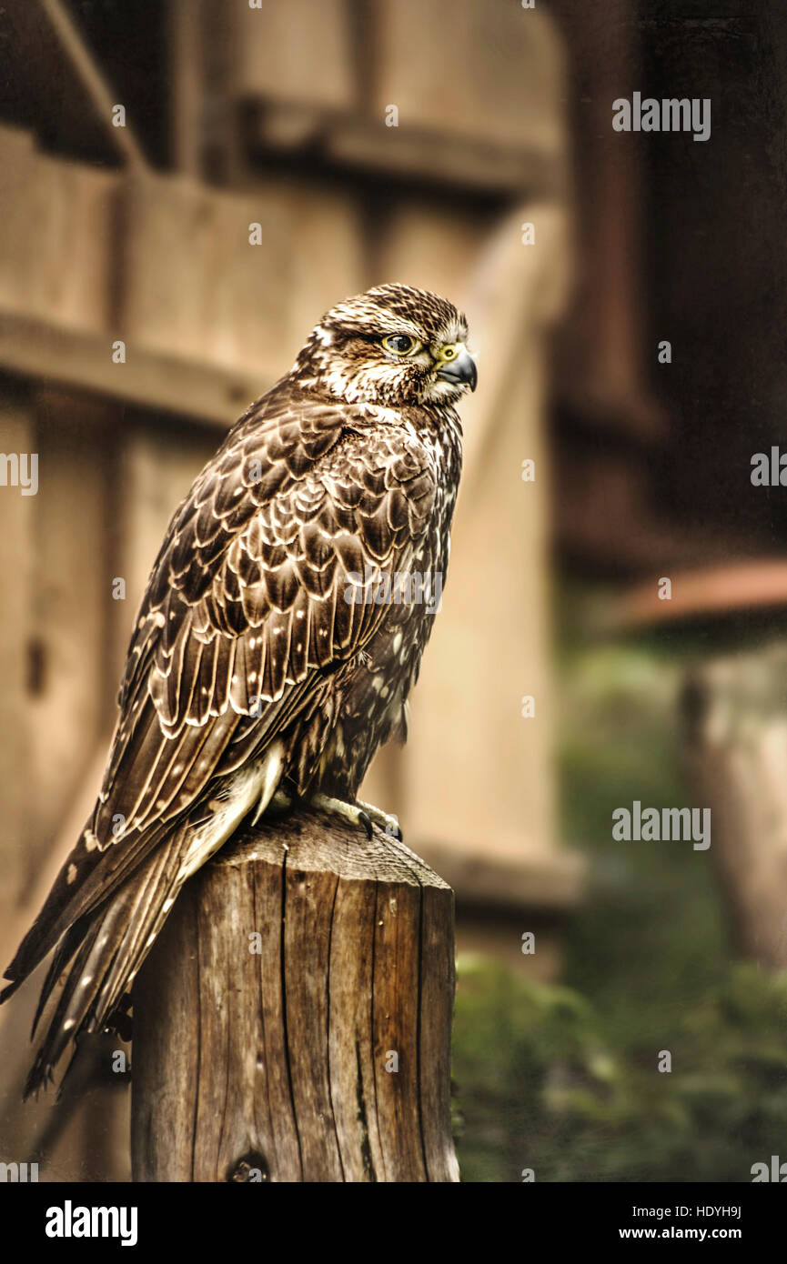 wild bird siting on wood - Stock Image