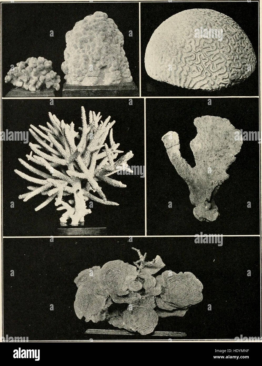 The sea-beach at ebb-tide - a guide to the study of the seaweeds and the lower animal life found between tidemarks (1901) Stock Photo