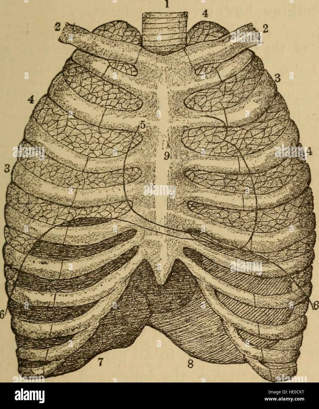 A healthy body  A textbook on anatomy, physiology, hygiene