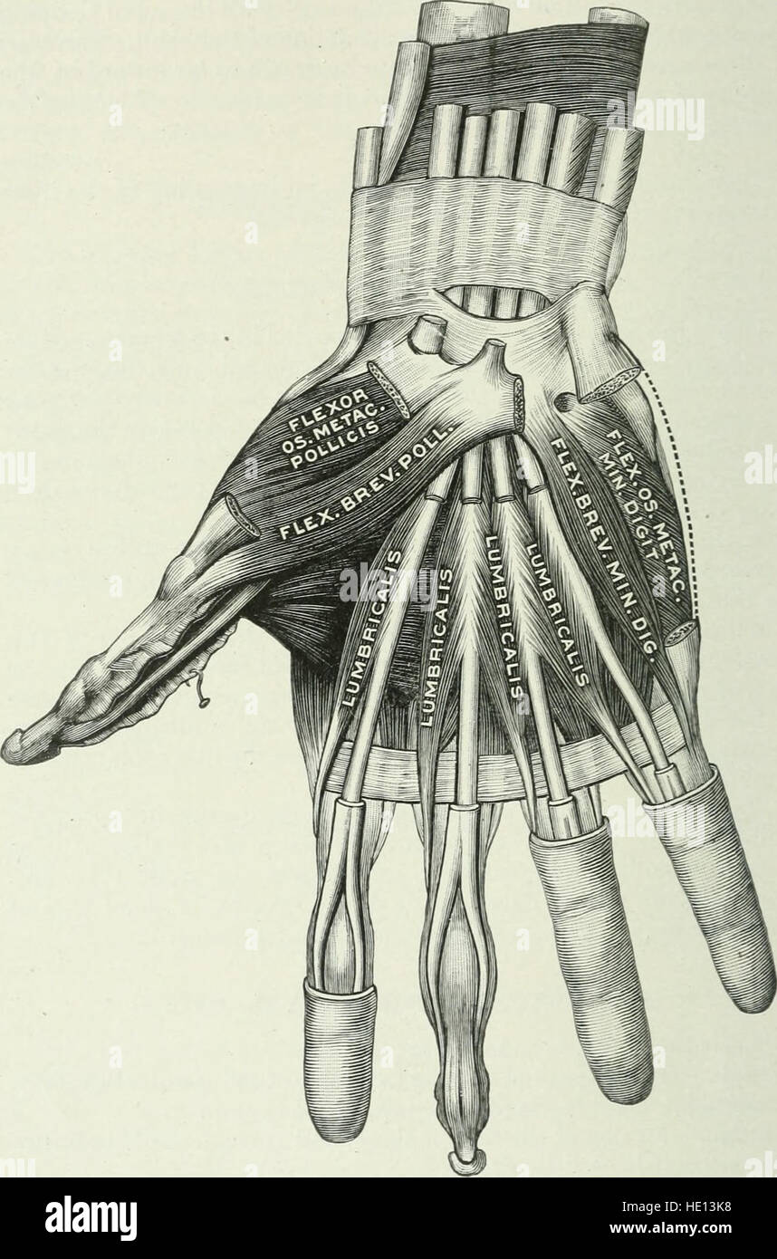 Applied anatomy and kinesiology; the mechanism of muscular movement ...
