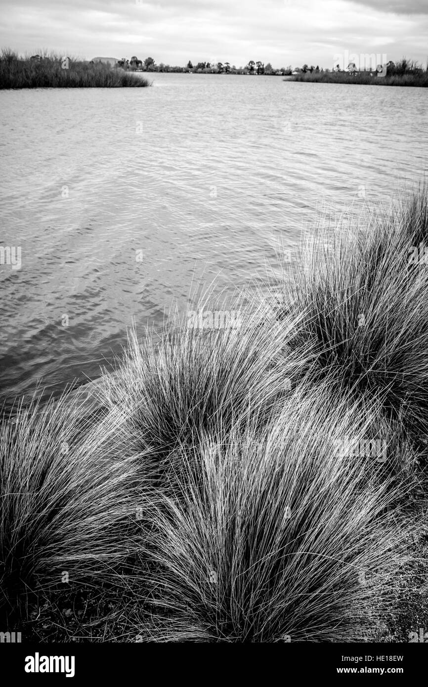 Wind whipped dunegrass alongside the water's edge of an inland lake. Black and white. B&W - Stock Image