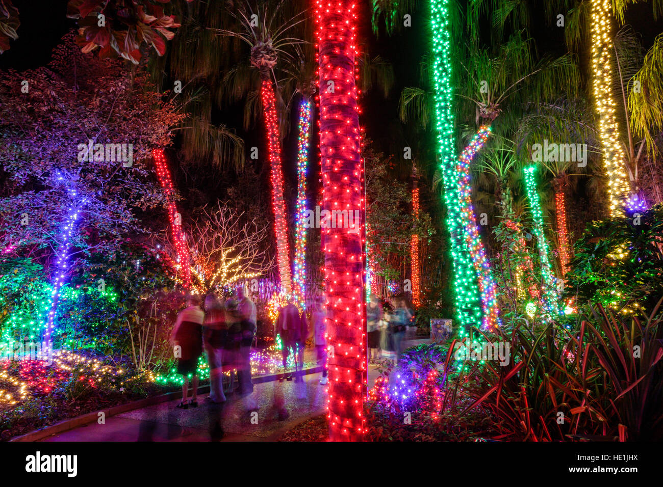 Largo Botanical Gardens Christmas Lights 2020 Selby Gardens Sarasota Christmas Lights 2020 Ford | Feyhbs