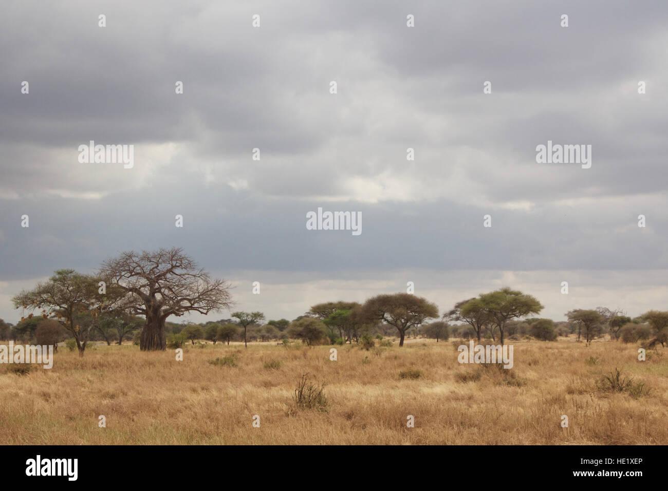 Tarangire National Park - Stock Image