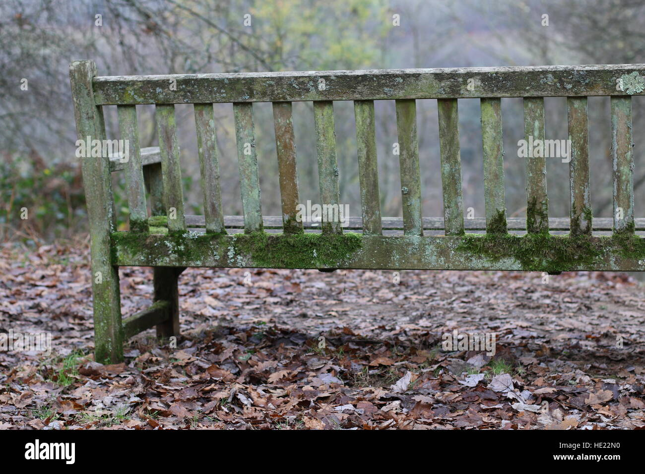 Green mould on a seat bench in winter with leaves on the ground - Stock Image