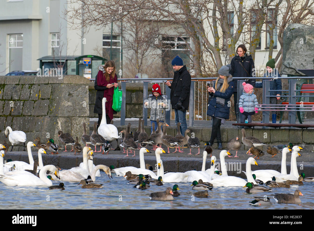 Parents checking smartphones while children are feeding ducks, geese and flock of whooper swans at lake in city - Stock Image
