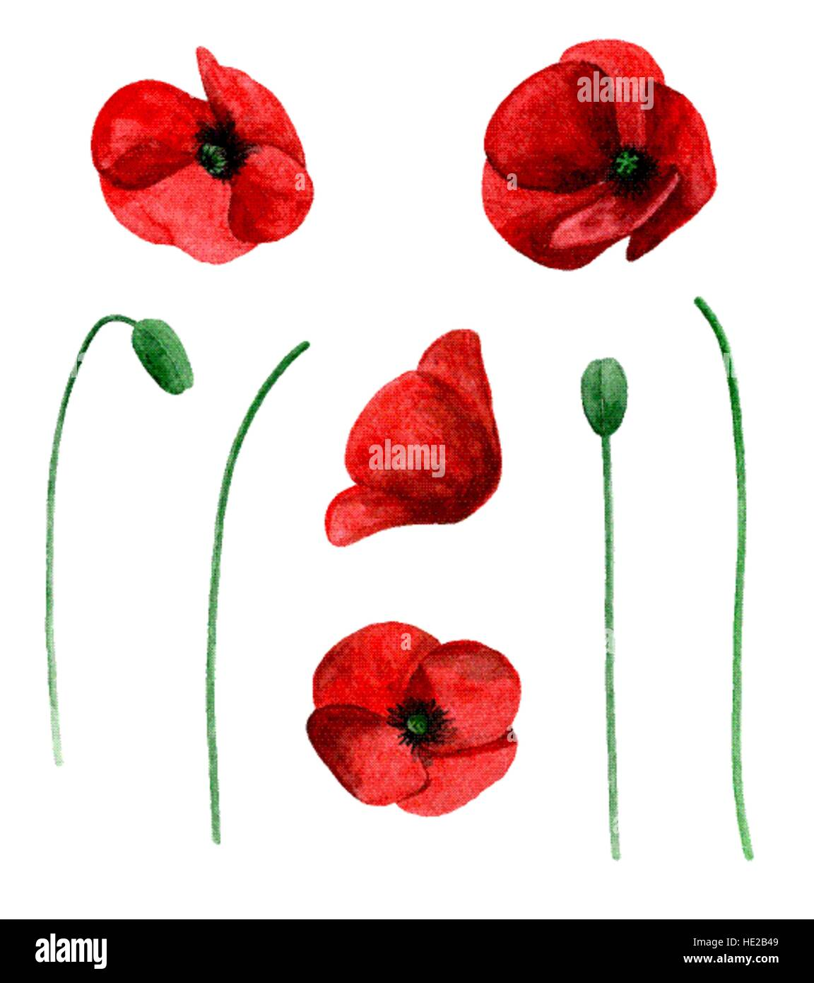 Watercolor Poppy Vector Clip Art Red Flowers Clipart Stock Vector