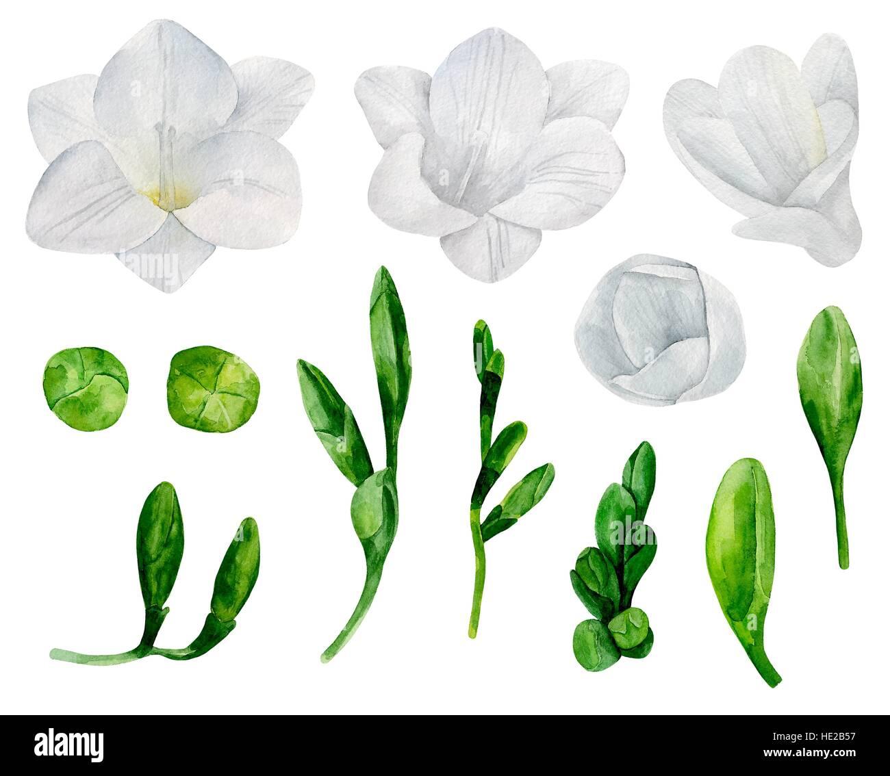 White freesia flowers vector clipart watercolor wedding floral white freesia flowers vector clipart watercolor wedding floral mightylinksfo