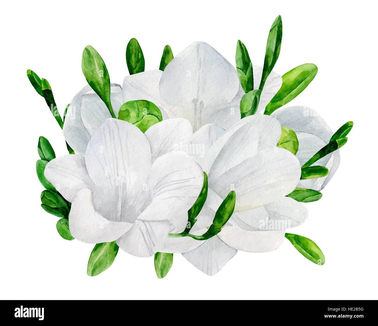 Watercolor Wedding Freesia Bouquet Vector Clip Art White Flowers