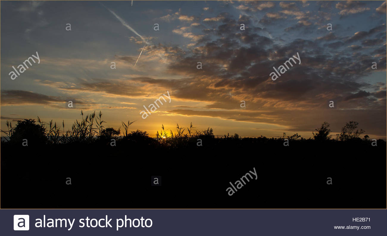 Sunsetting behind bushes and grasses - Stock Image