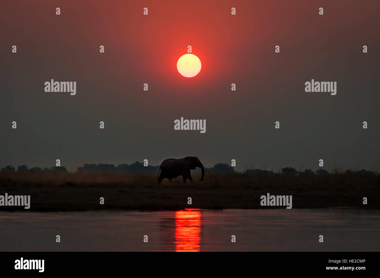 Silhouette of an elepanhts at sunset in the Chobe National Park in Botswana; Concept for travel safari and travel - Stock Image